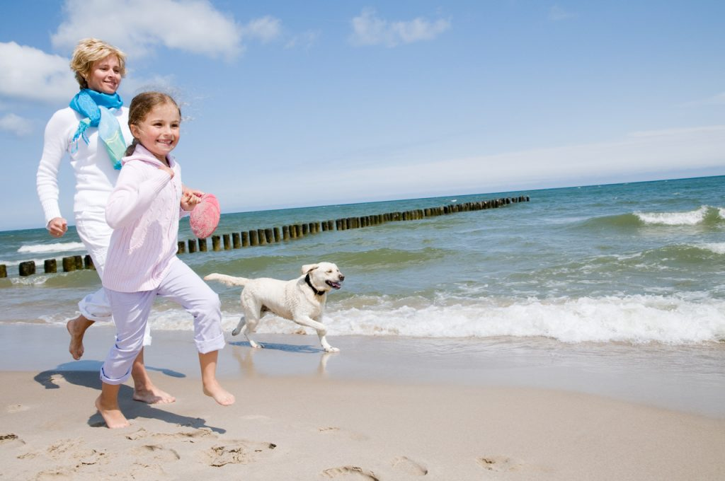 Taking Your Dog on Holiday in the UK