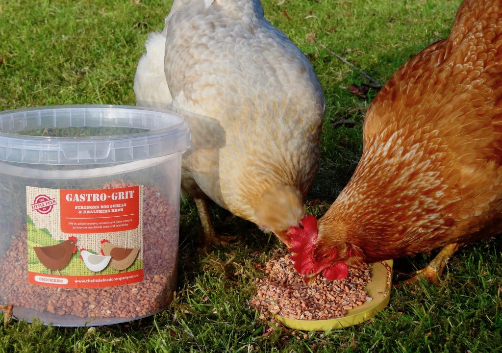 grit for chickens, oyster shell