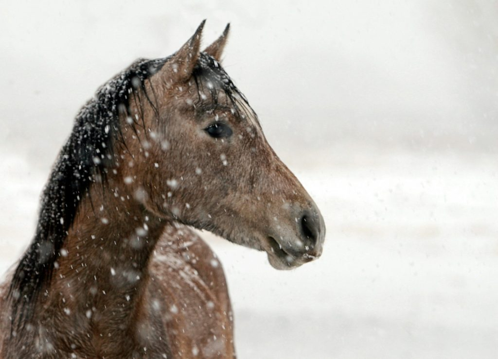 keeping horses warm in winter