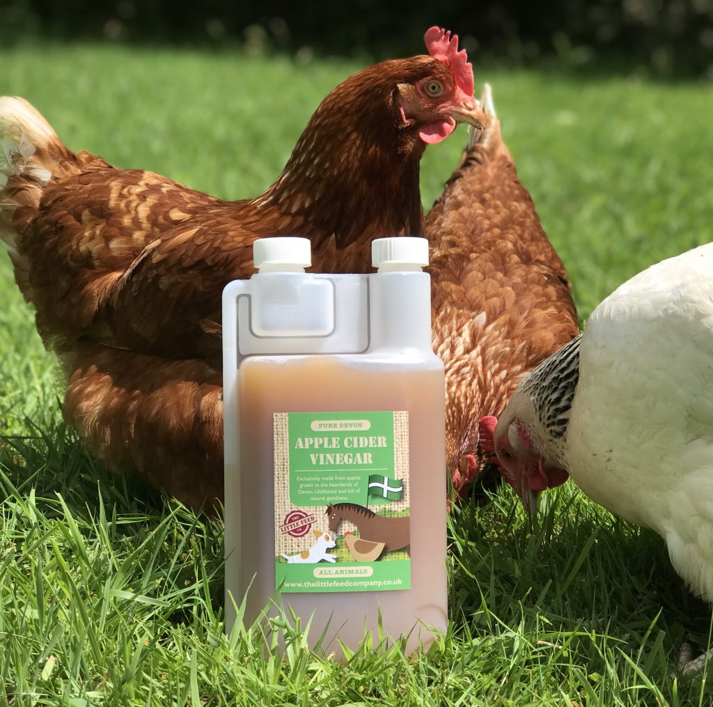 cider vinegar for chickens, rescue hens, ex battery hens