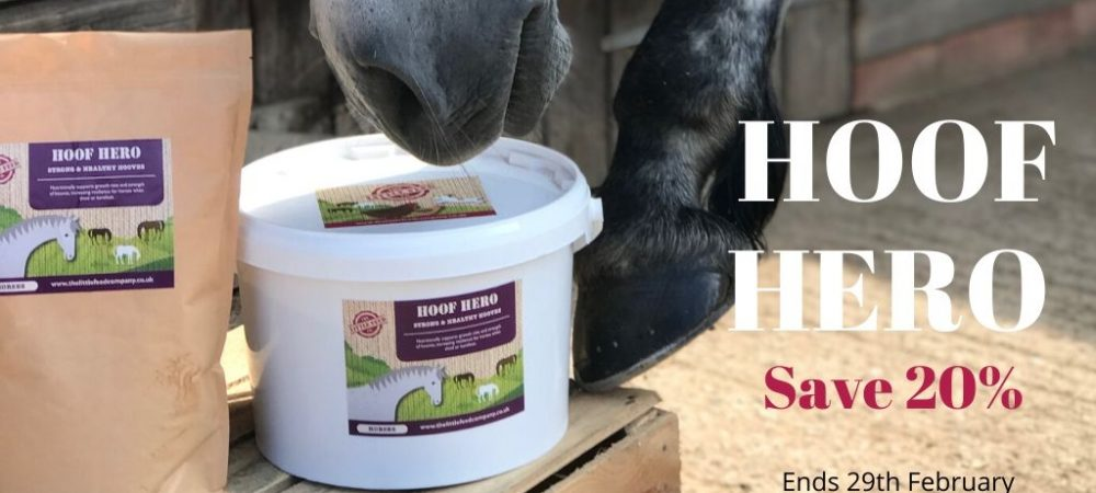 hoof supplement, horse, pony