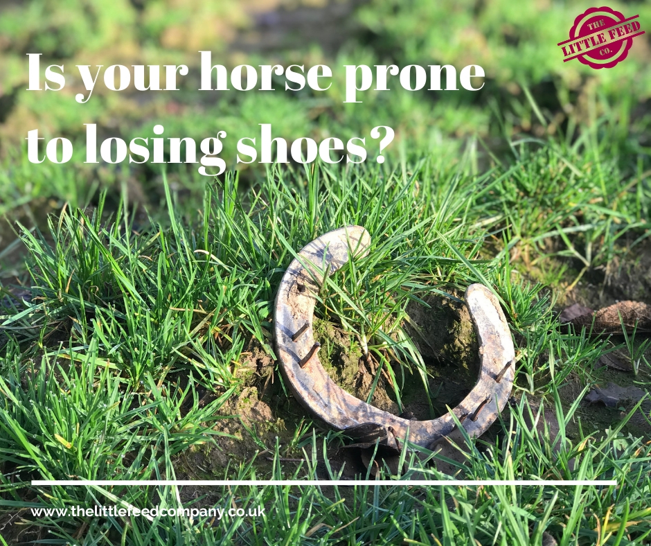my horse keeps losing his shoes