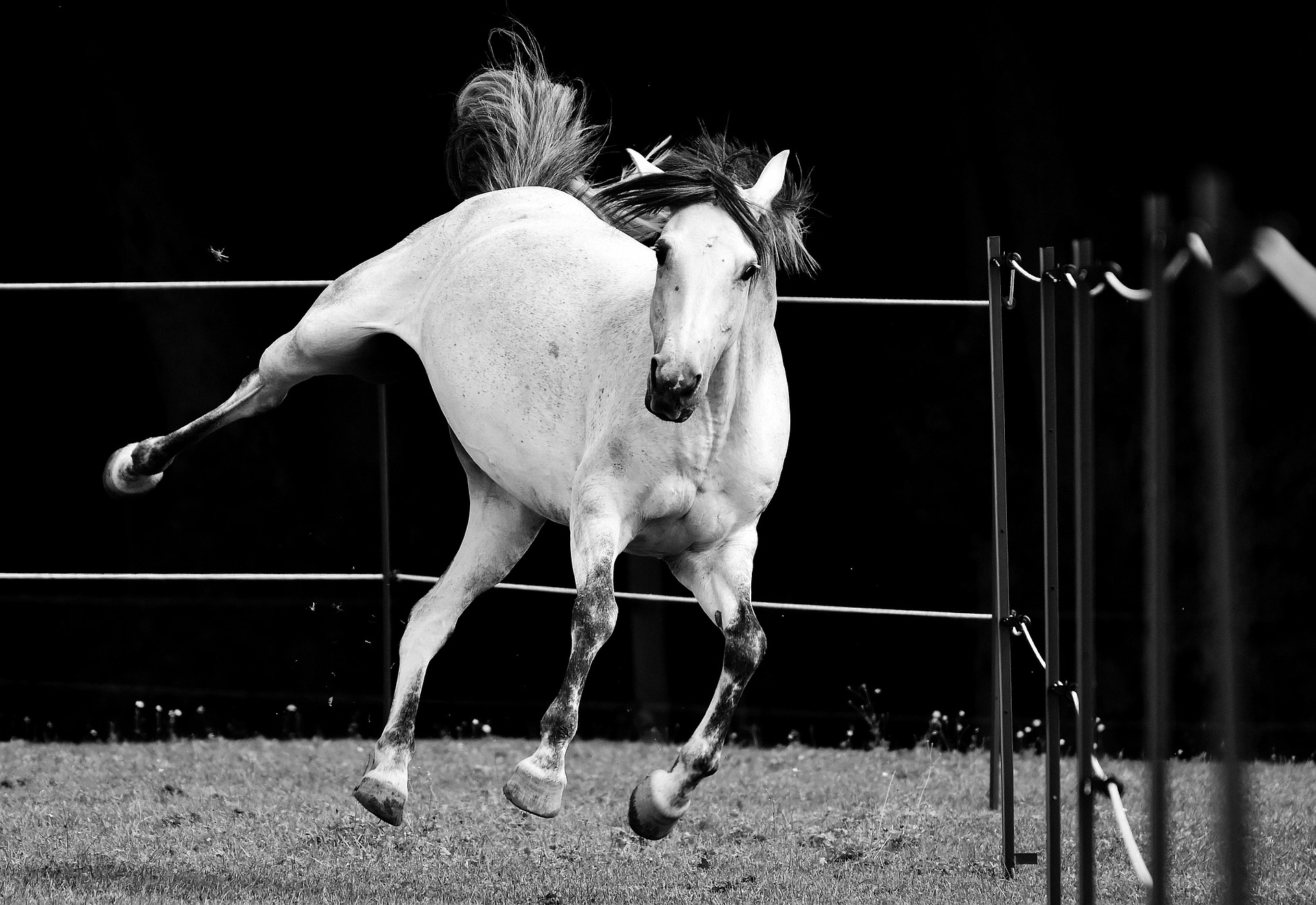 glucosamine sulphate, glucosamine for horses, joint supplement for horses