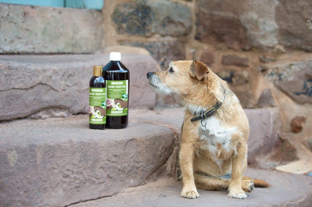 Hemp Oil for Dogs, Is Hemp Oil good for Dogs?