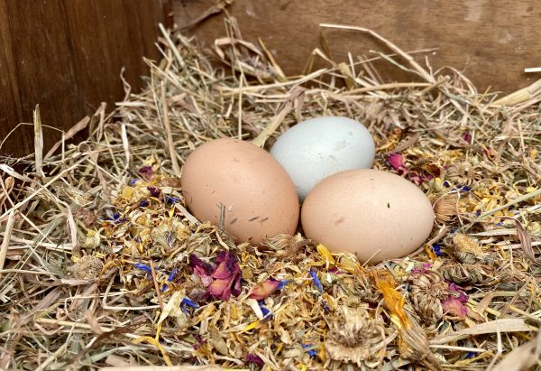nest box herbs for chickens