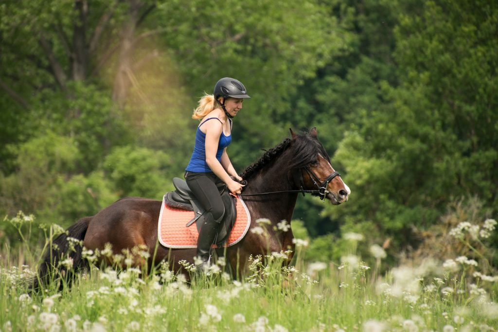 Why do horses love Cow Parsley?